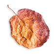 https://soay.be/wp-content/uploads/2020/11/small_leaf_02.png