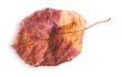 https://soay.be/wp-content/uploads/2020/11/small_leaf_03.png