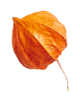 https://soay.be/wp-content/uploads/2020/11/small_leaf_04.png